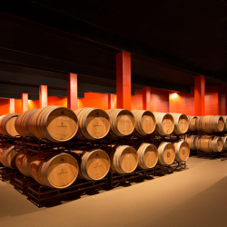 Visit Winery Costers del Sió October 17, 2020 | Siós Experience